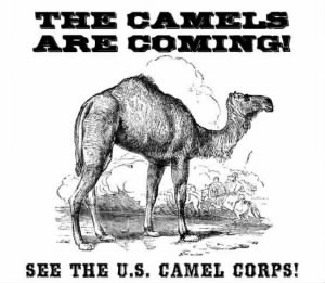 Douglas-the-Camel-Event-Poster-Legal.jpg